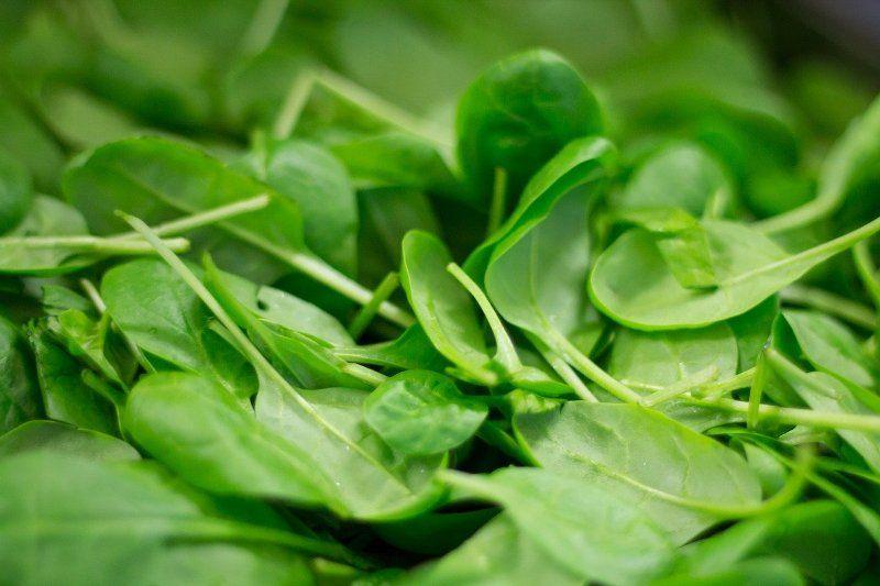 spinach plant nutrition fresh leaf